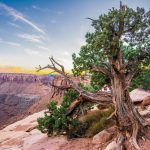 Bài học từ triết lý sống của cây?
