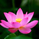 5 thói quen đơn giản giúp thay đổi hoàn toàn cuộc sống